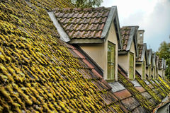 Roof covered with moss Stock Photos
