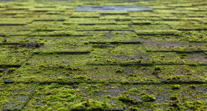 Roof covered with moss Royalty Free Stock Images