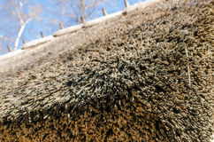Roof covered with straw, close-up Stock Photography