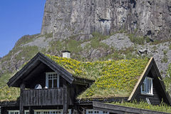 Roof with dandelion meadow Royalty Free Stock Photo