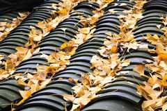 On the roof of the fallen leaves of Ginkgo Stock Photography
