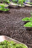 Roof Garden. A roof top hydroponics garden with a stone path way Royalty Free Stock Photography