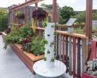 Roof Garden Royalty Free Stock Photos