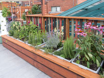 Roof Garden. Rooftop garden in urban setting Royalty Free Stock Image