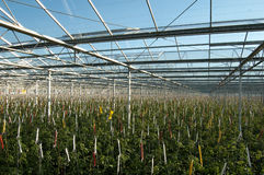 Roof of glasshouse Stock Images