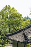The roof and green tree Royalty Free Stock Images