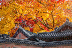 Roof of Gyeongbukgung and Maple tree in autumn. Royalty Free Stock Image