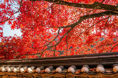 Roof of Gyeongbukgung and Maple tree in autumn. Royalty Free Stock Photo