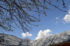 The roof of the home board and branches of apple leaf. Blue sky is the roof of the house and the branches of apple still leaf stock photos