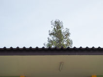 Roof of house and tree Royalty Free Stock Images