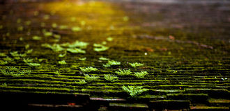 On the roof. I took this on an old title of an ancient house in Hue City in the raining season.  It's dark and dirty but the green is on Royalty Free Stock Photography