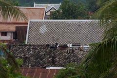 Roof @ Luang Prabang/ Laos Stock Photos
