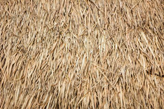 Free Roof Made Of Dried Leaves Of The Cogon Grass Royalty Free Stock Images - 57970009