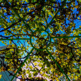 A roof made out of leaves Stock Images