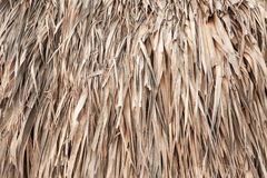 Roof made of palm leaves, background texture Royalty Free Stock Image