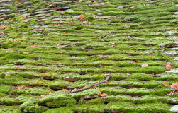Roof moss Stock Image