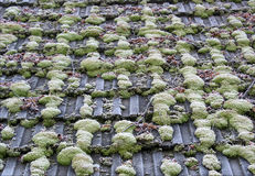 Roof with moss and hoarfrost Royalty Free Stock Photography