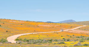Roof of Namaqualand trail Royalty Free Stock Image