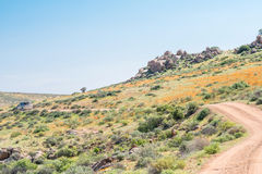 Roof of Namaqualand trail Royalty Free Stock Photography