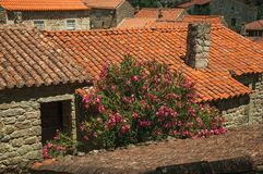 Roof from old houses and flowered shrub. Rooftops covered by moss and lichens on old houses with chimneys and leafy flowered shrub, in a sunny day at Sortelha royalty free stock images