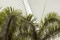 A roof and palm trees in Puerto Rico Royalty Free Stock Images