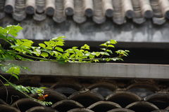 Roof plant Royalty Free Stock Images