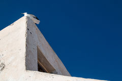 Roof with a seagull Stock Photo