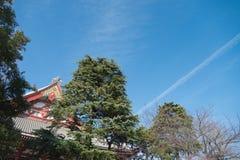 Roof of Senjoji-ji Temple in Asakusa,Tokyo in Japan Royalty Free Stock Images
