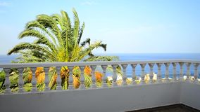 Roof terrace with view to the atlantic and date palm stock footage
