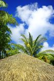 Roof of thatched house Stock Image
