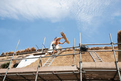 Roof thatchers at work. Catching a bundle of reeds being throw from below, ready to lay on the roof Stock Photos