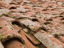 Roof tiles covered in moss. Close up of old red roof tiles covered in moss royalty free stock image