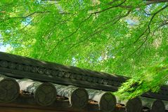 Roof tiles and green tree Stock Photos