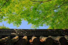 Roof tiles and green tree Royalty Free Stock Photos