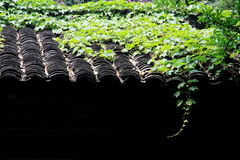 roof tiles and plant Royalty Free Stock Photography