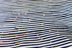 Roof-top pattern. Roof covering in the Japanese ancient style. The unwrapped stalks of a bamboo. Interesting pattern Royalty Free Stock Images