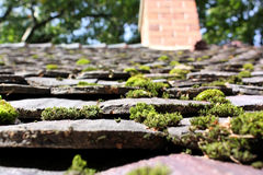 Roof With Moss Royalty Free Stock Photo