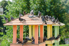 The roof of wooden pigeon with pigeons sitting on it Stock Photo