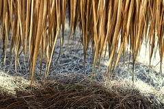 The roof of a yellow straw, Bali, Indonesia Stock Photography