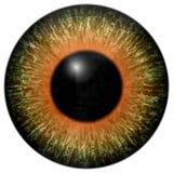 Roofdier dierlijk 3d oog vector illustratie