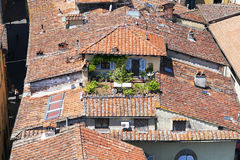Roofgarden in the city of Lucca Stock Image