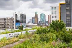 Roofgarden in Rotterdam, Nederland Stock Afbeeldingen