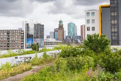 Roofgarden in Rotterdam, Netherlands. Vegetable roofgarden on top of an office building in the citycenter of Rotterdam, Netherlands. The biggest rooftop farm in stock images