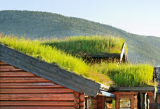 Roofs with grass. Stock Photography