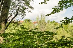 The roofs of houses in the green foliage of trees. Landscape stock photo