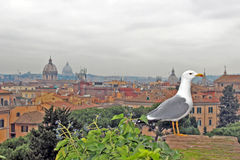 Roofs of Rome royalty free stock photos