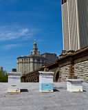 Rooftop beehives in New York City. Urban beekeeping. The days of guerilla beekeeping in the Big Apple are gone. After a ban of many years, keeping honey bees in Royalty Free Stock Photography