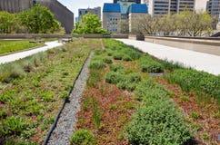 Rooftop garden Stock Image