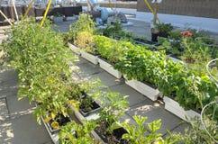 Rooftop Garden Stock Photos