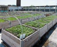 Rooftop Garden royalty free stock photos